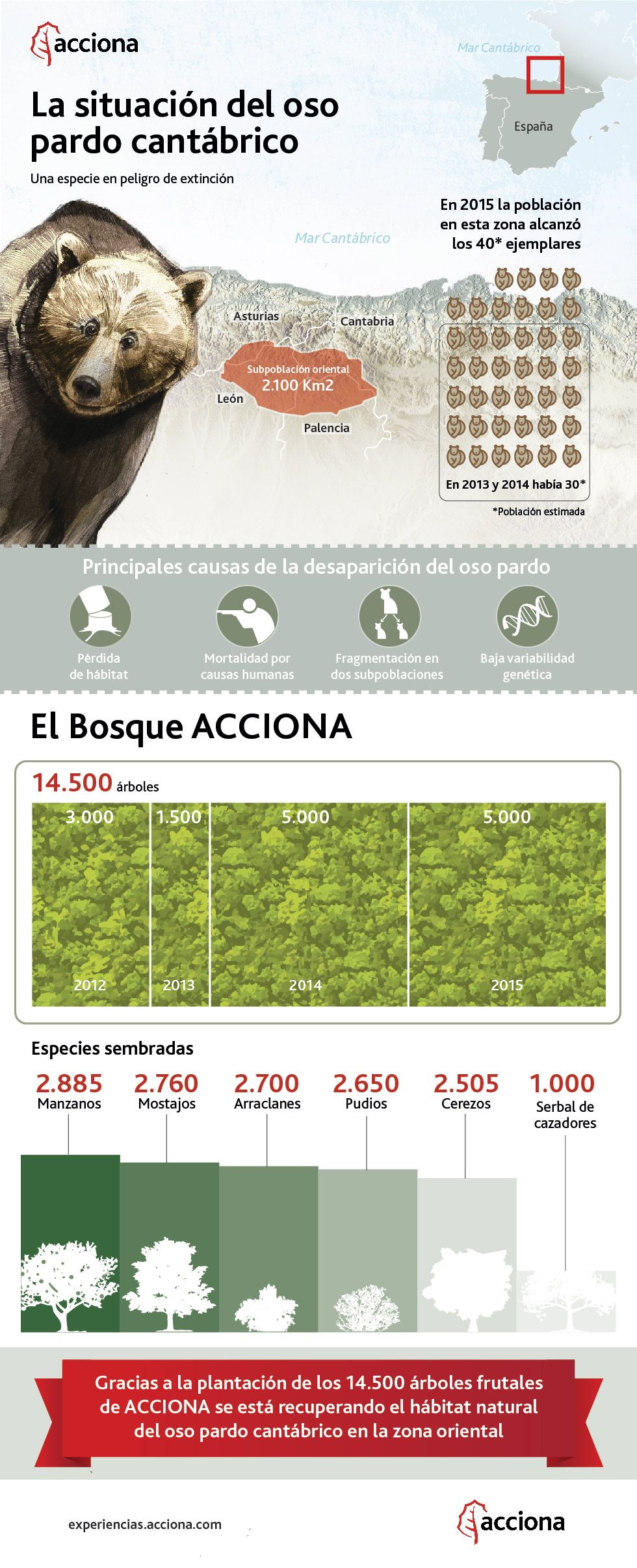 The situation of the brown bear in Spain. Infographics